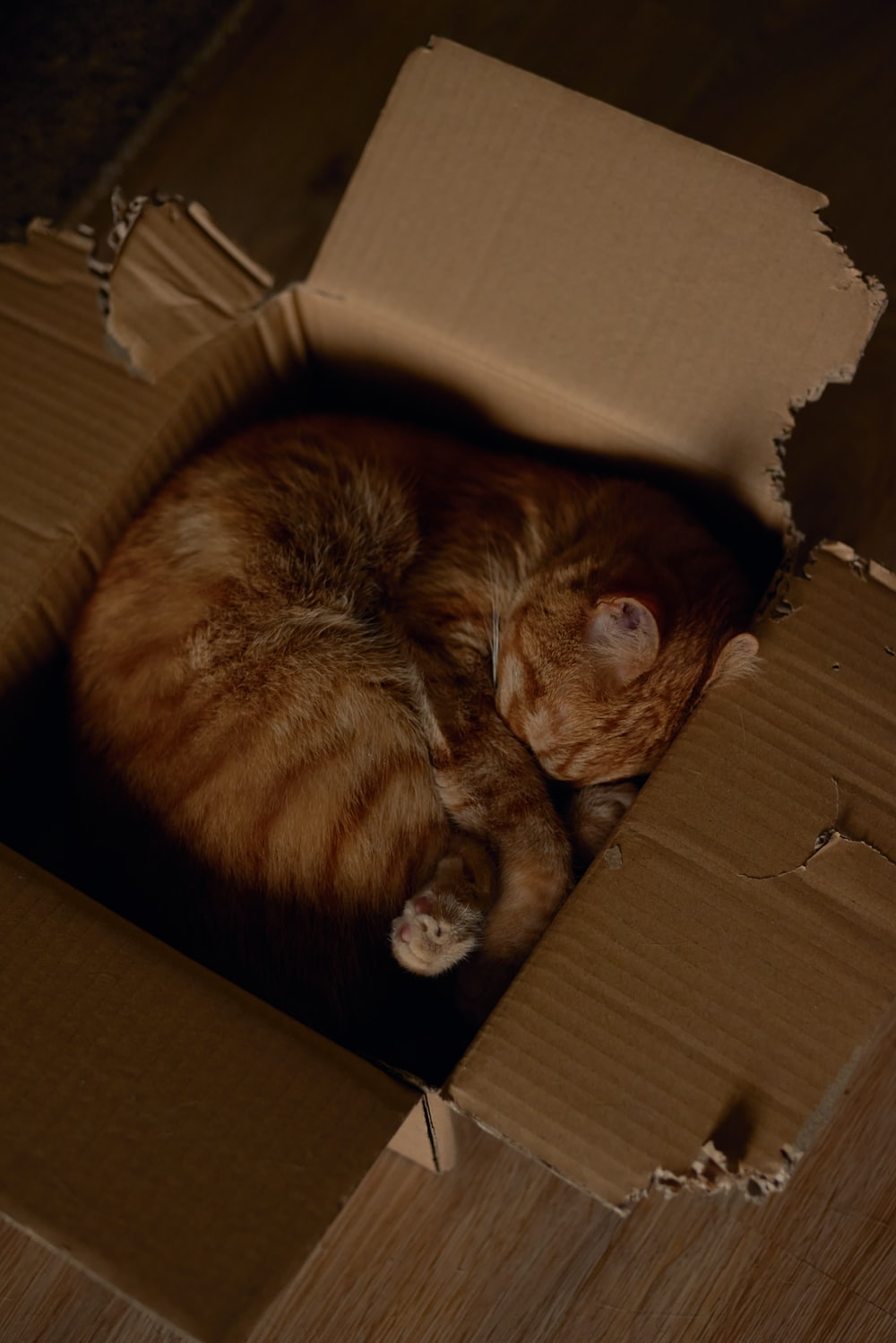br own tabby cat in brown cardboard box