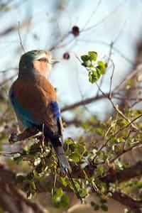 Where did the Birds go birds stories