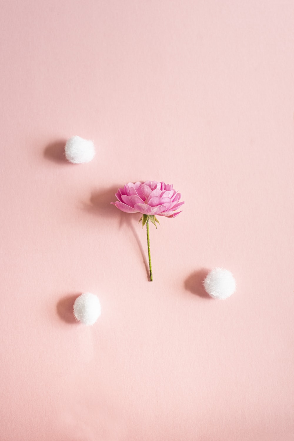 pink and white flower on pink surface