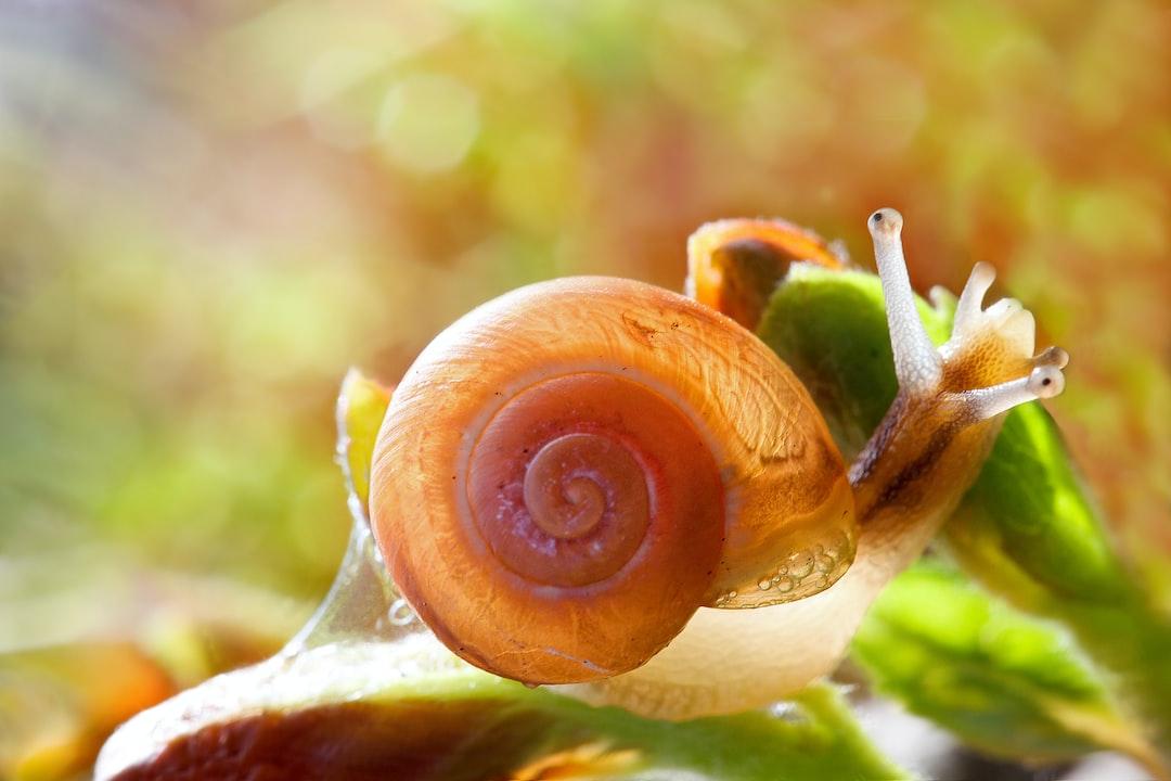 Snail Villa