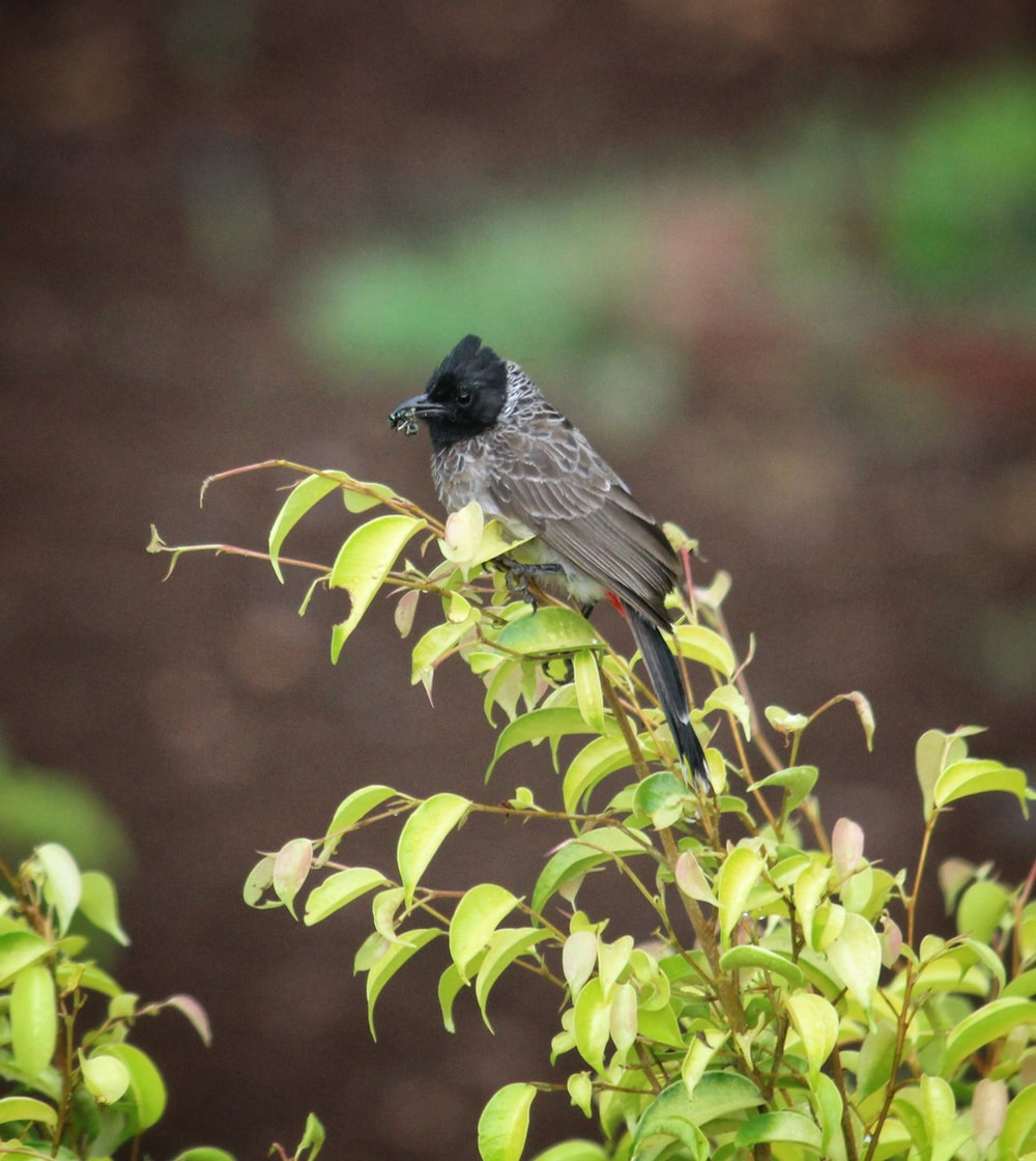 black and brown bird on green plant