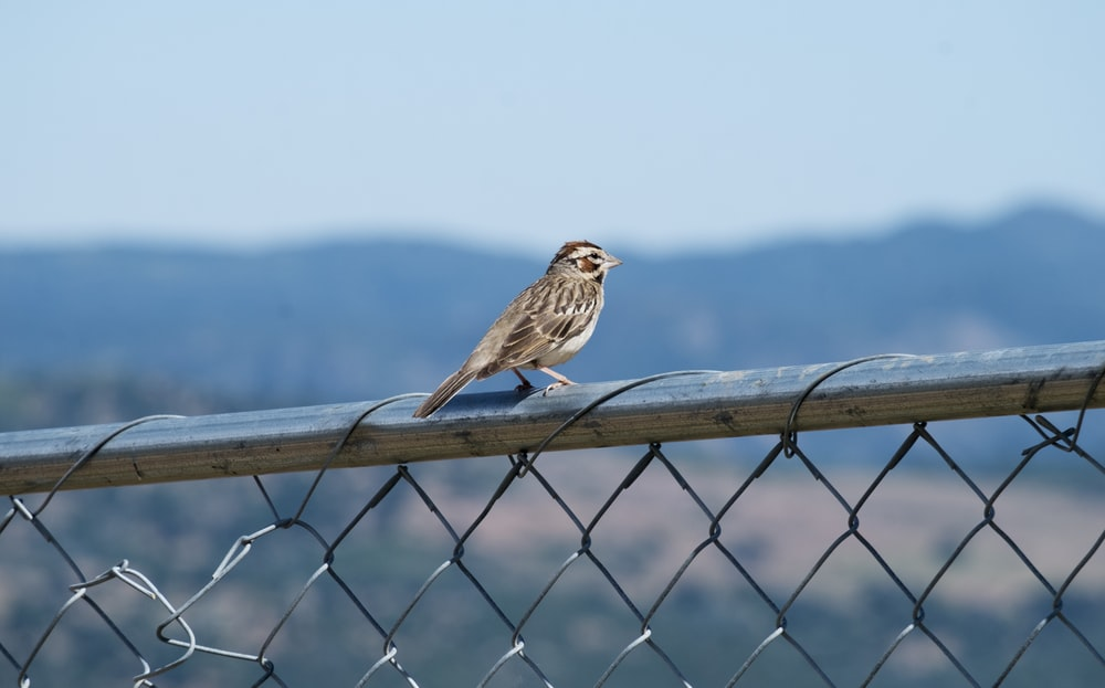 brown bird on black metal fence during daytime