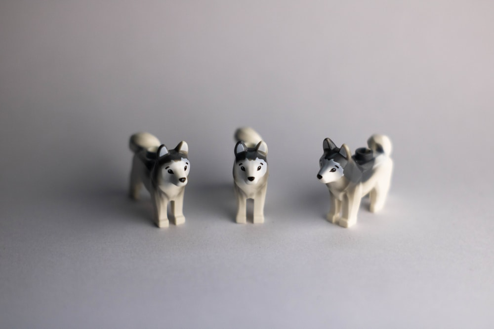 white and black siberian husky puppy litter