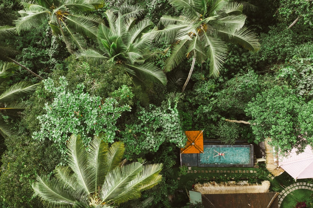green palm tree near brown wooden bench