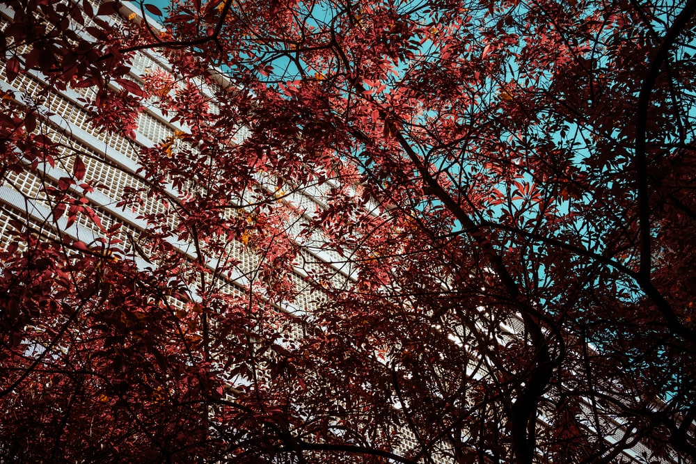 red leaf tree during daytime
