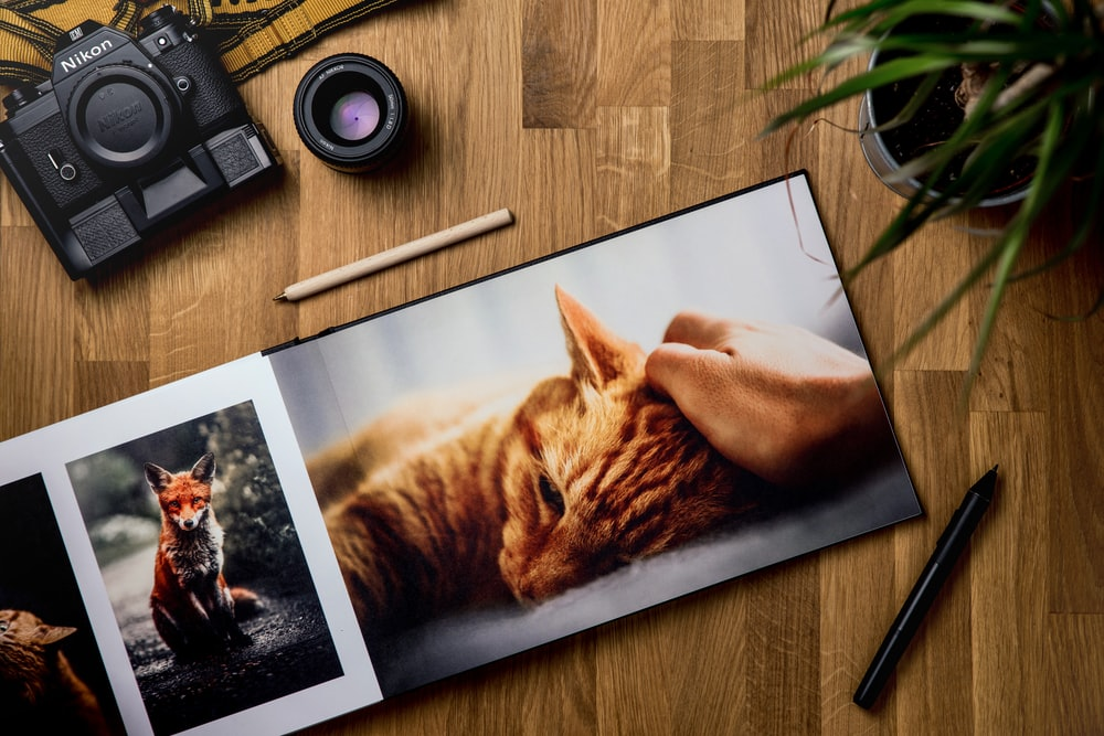 orange tabby cat on brown wooden table