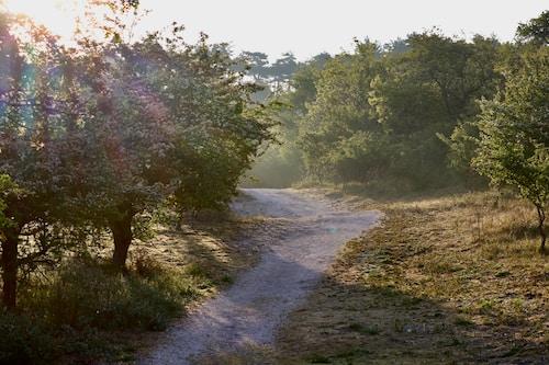 Walk & Talk Wandel coaching in de natuur met Lars Boeck