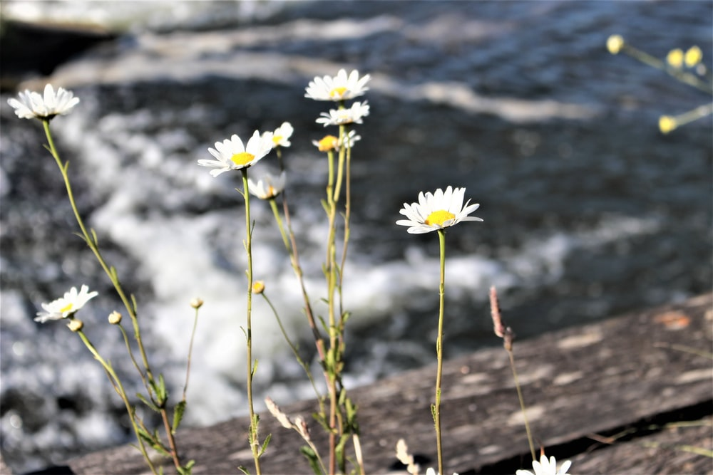 white flowers on brown wooden log