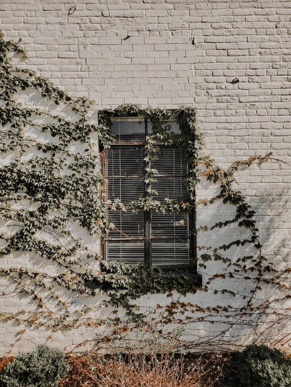 black wooden window on white brick wall