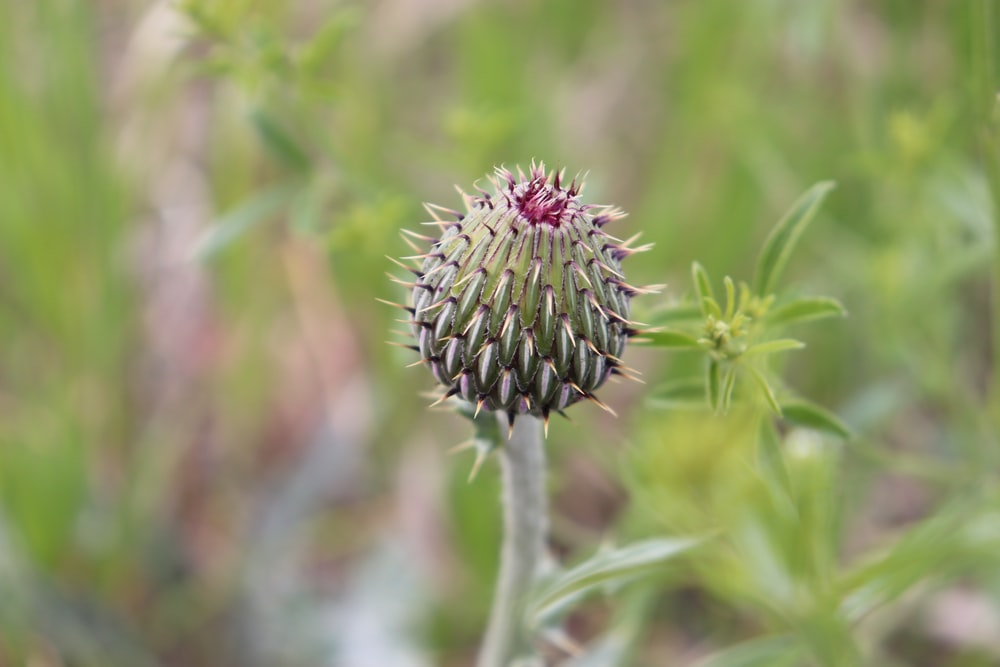green and pink flower bud in tilt shift lens
