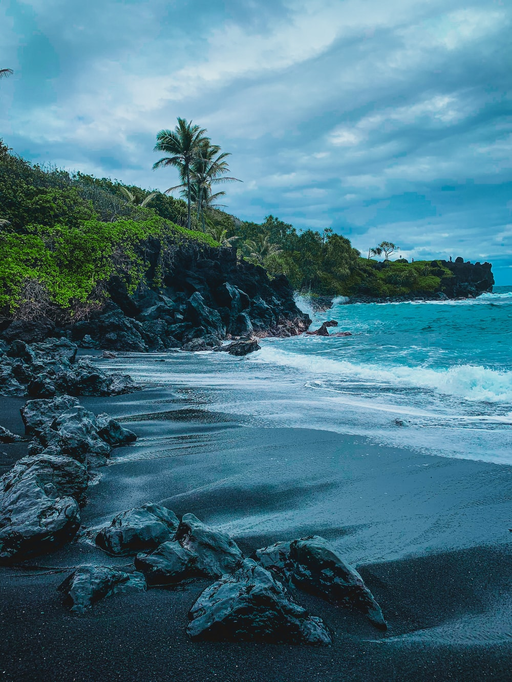 green trees on rocky shore during daytime