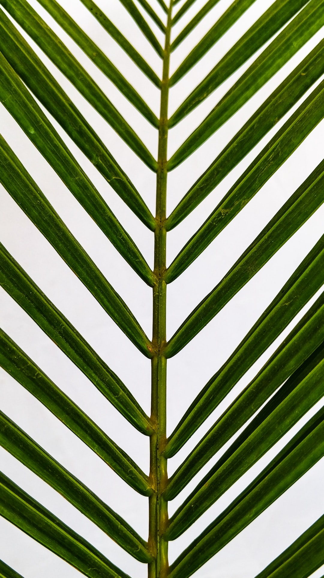 Close-up of palm leaves.