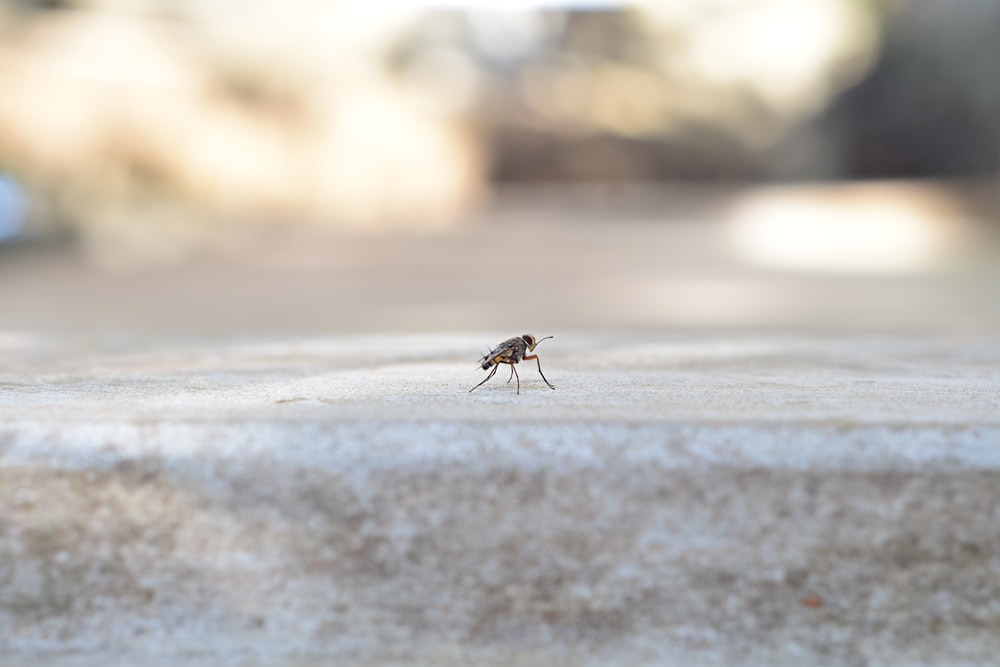 black and brown insect on gray sand during daytime