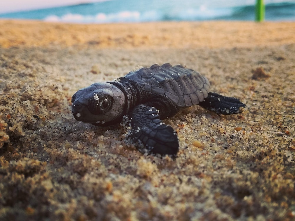 brown turtle on brown sand during daytime