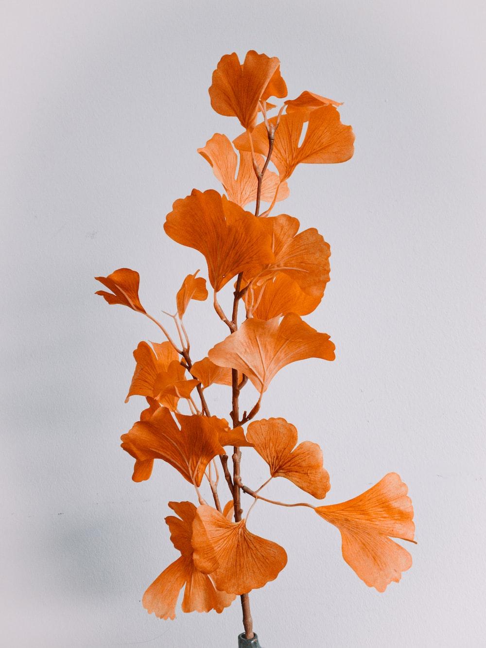 orange leaves on white surface