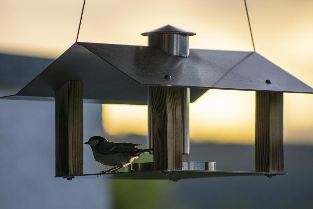 black bird on gray bird feeder