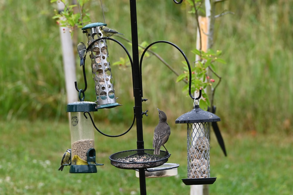 gray bird on black metal bird feeder