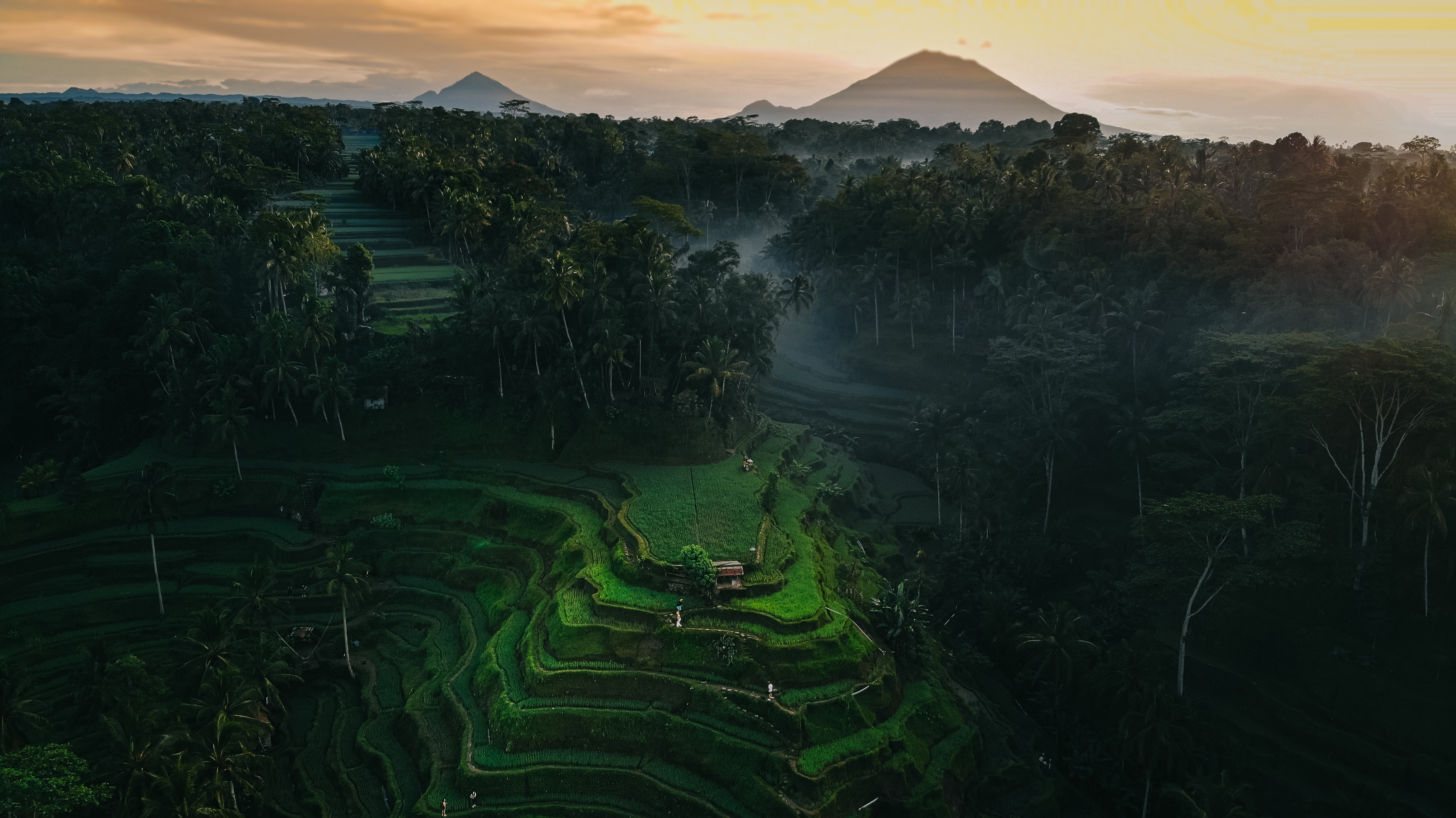 paradise vibes on Ubud