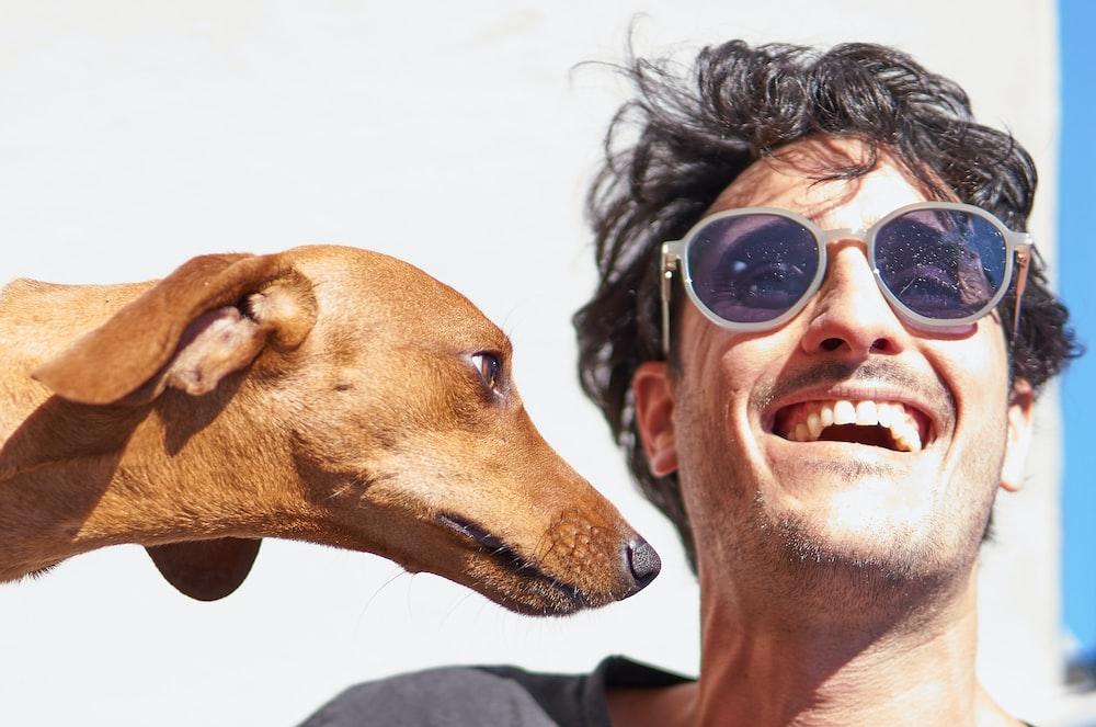 brown short coated dog wearing black sunglasses