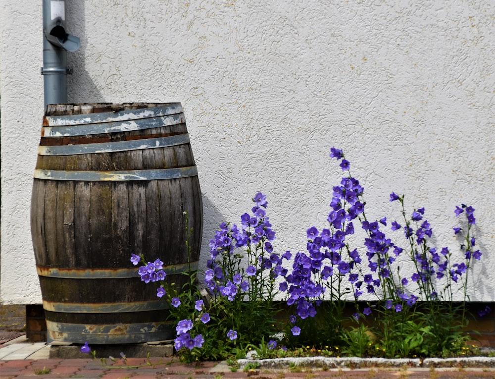 purple flowers on brown wooden barrel