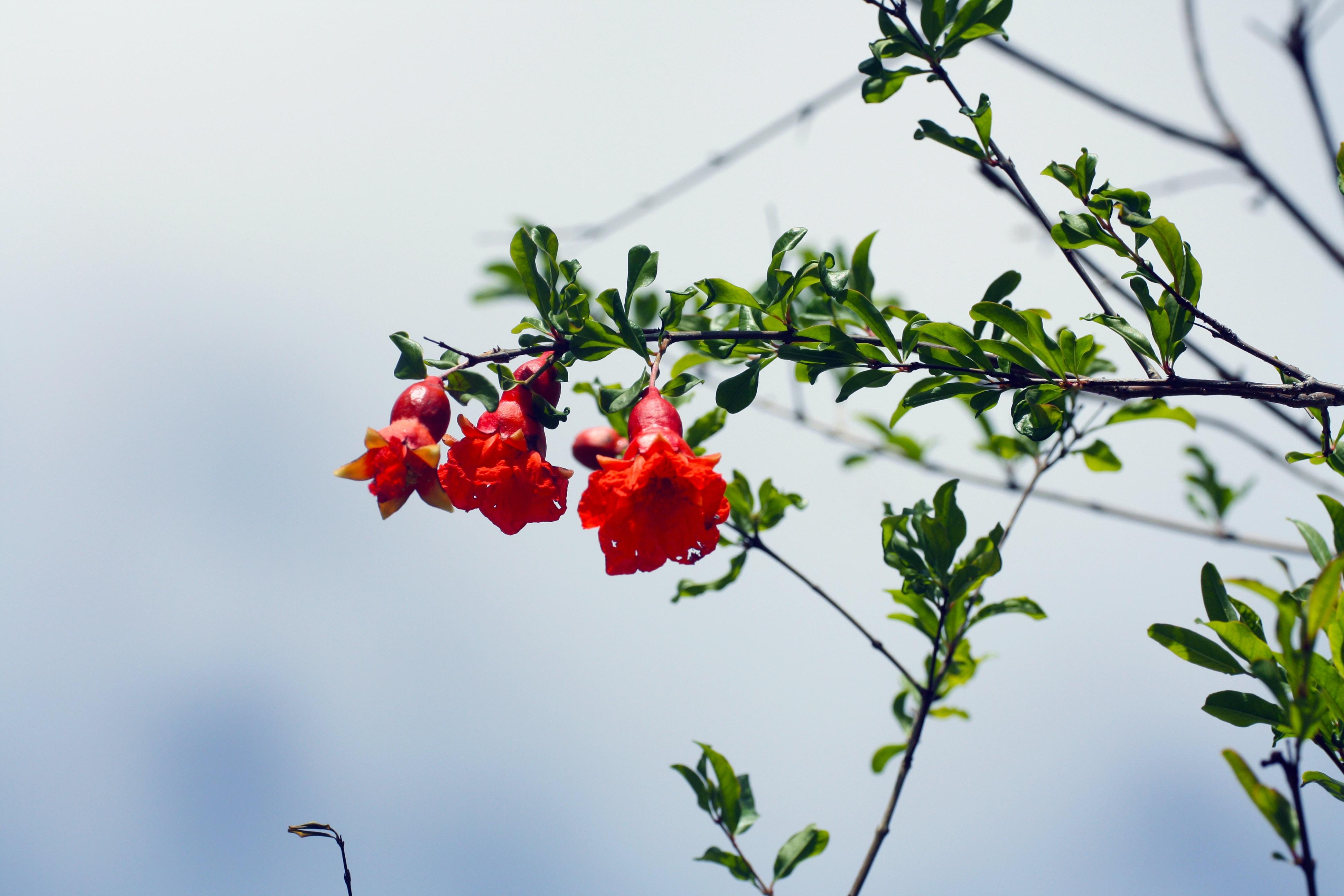 red flower on brown stem