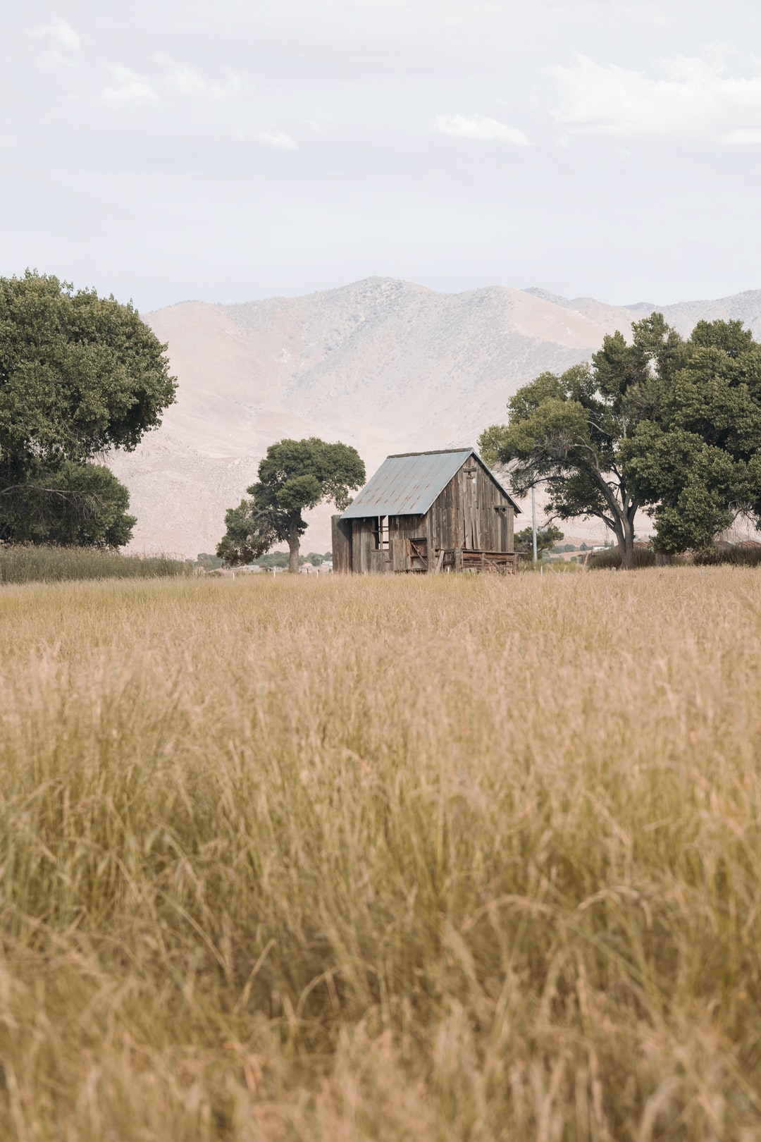 Old barn in the golden grass framed by trees - background plate