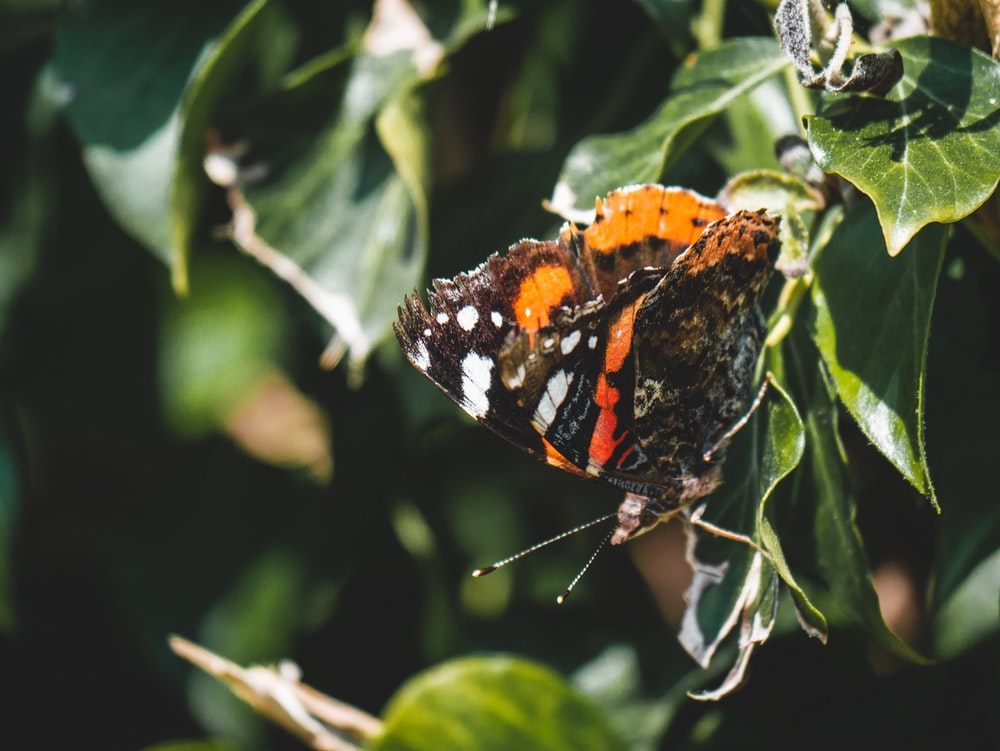orange black and white butterfly perched on green leaf
