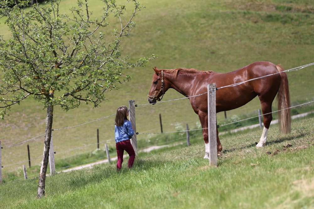 girl in blue jacket standing beside brown horse during daytime