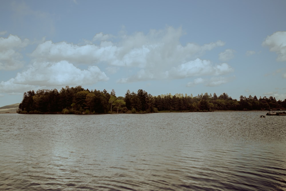 green trees beside body of water under white clouds and blue sky during daytime