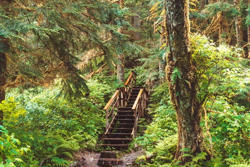 brown wooden bridge in the middle of forest