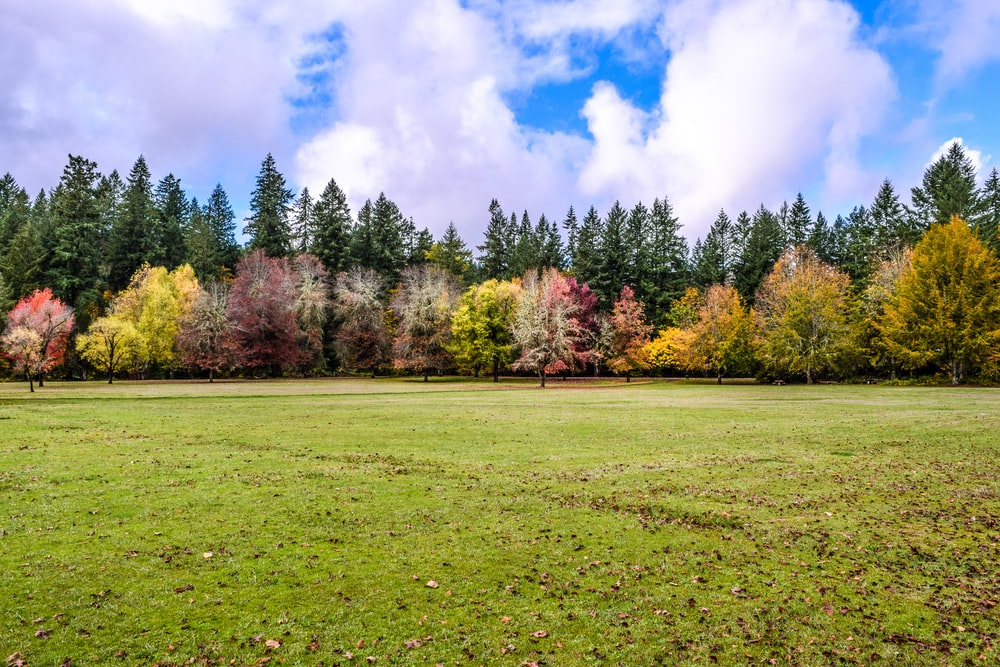 green grass field with trees under blue sky and white clouds during daytime