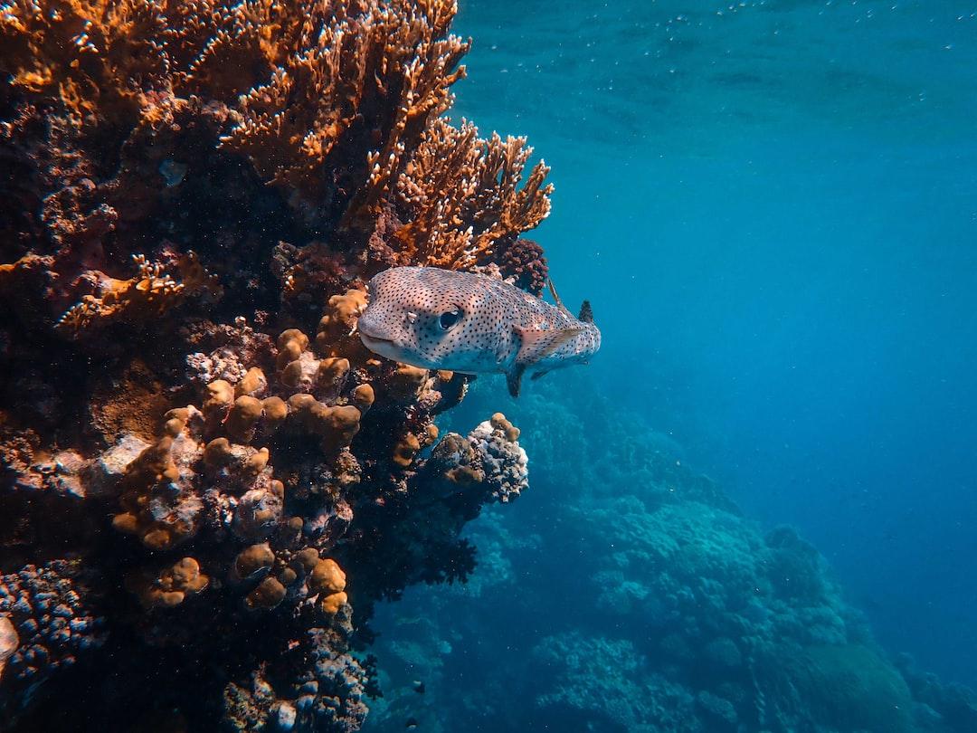 Gray and Black Fish Under Water - unsplash