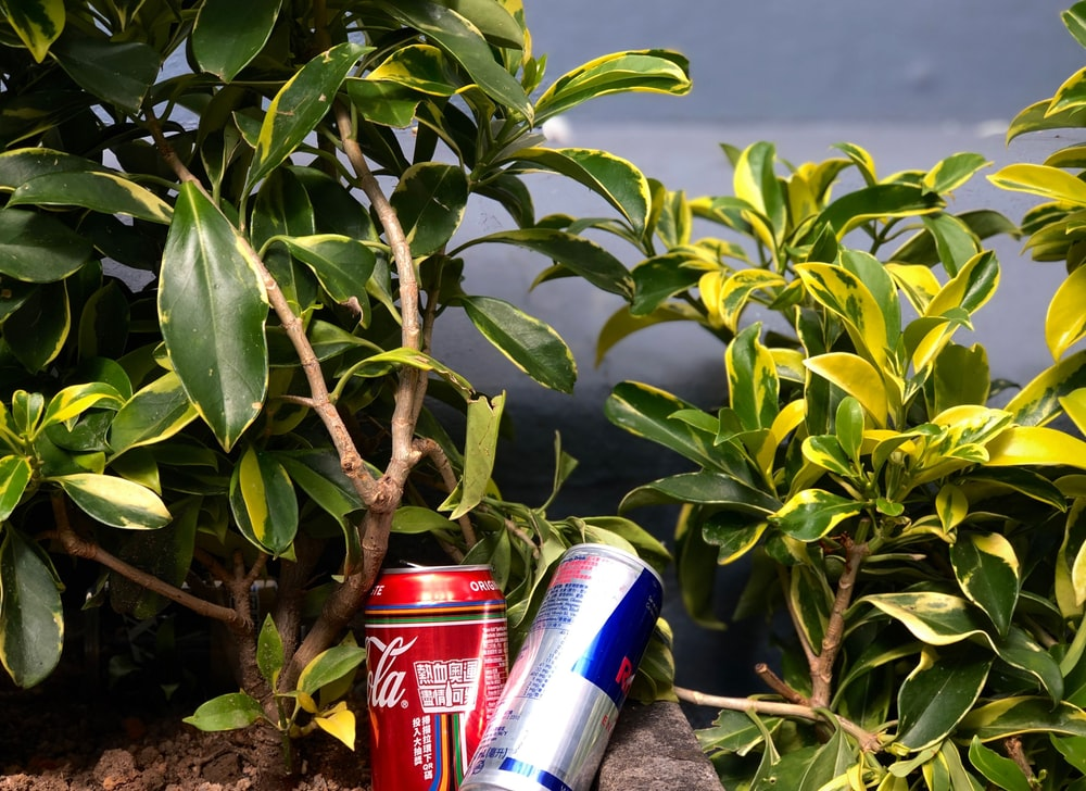 red and blue can beside green plant