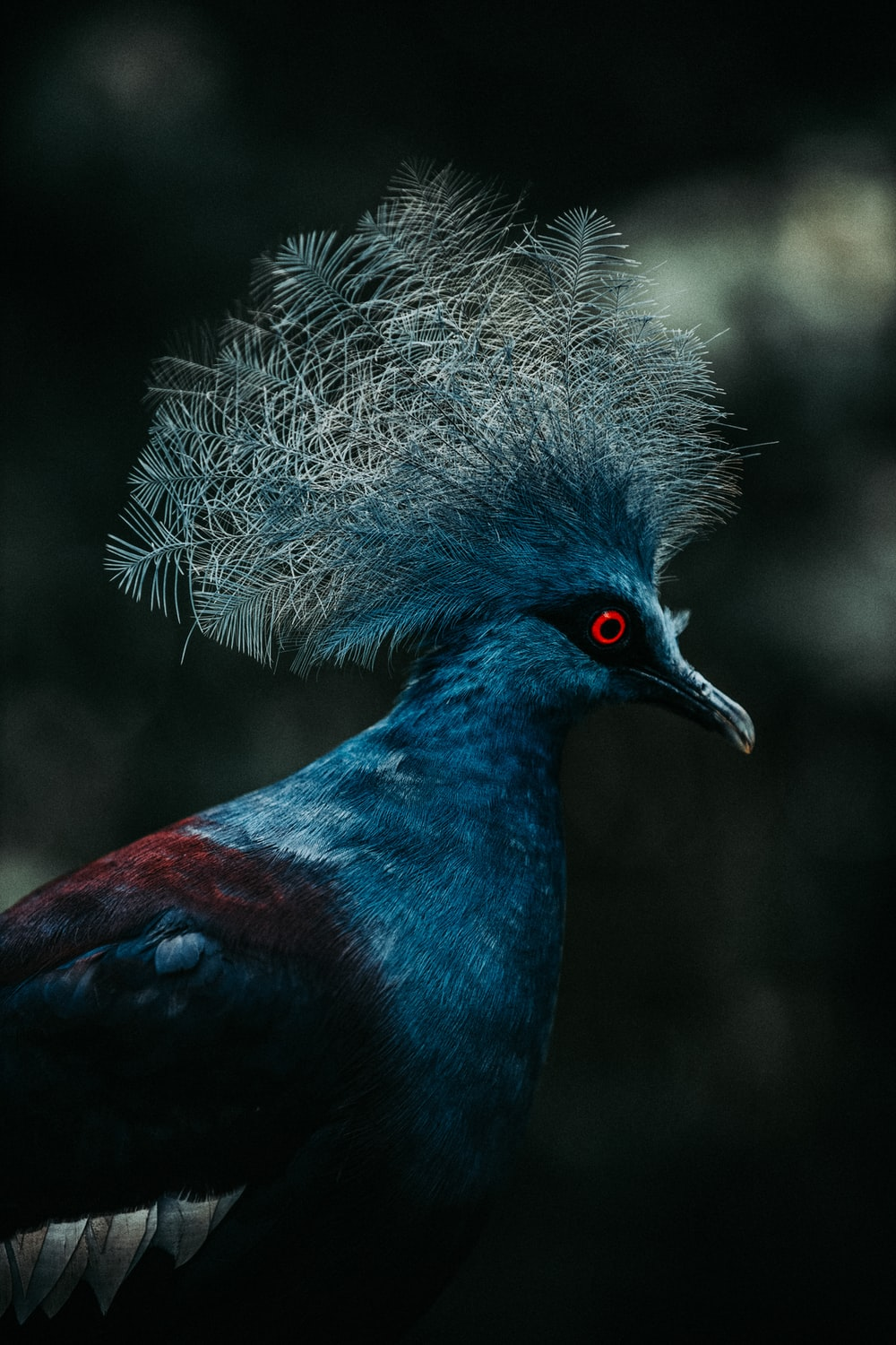 blue and black bird with white fur
