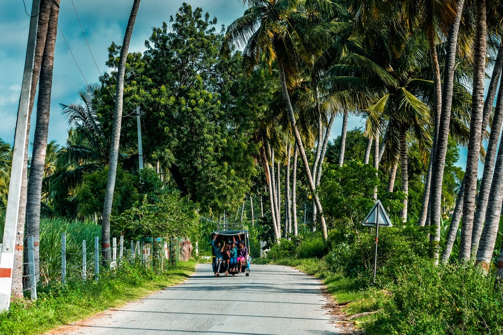 people riding on green and black carriage on gray concrete road between green palm trees during