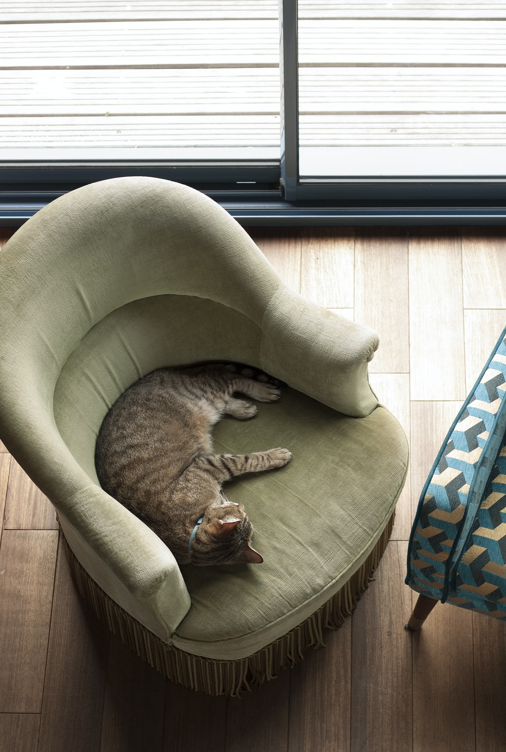 brown tabby cat lying on brown and blue pet bed