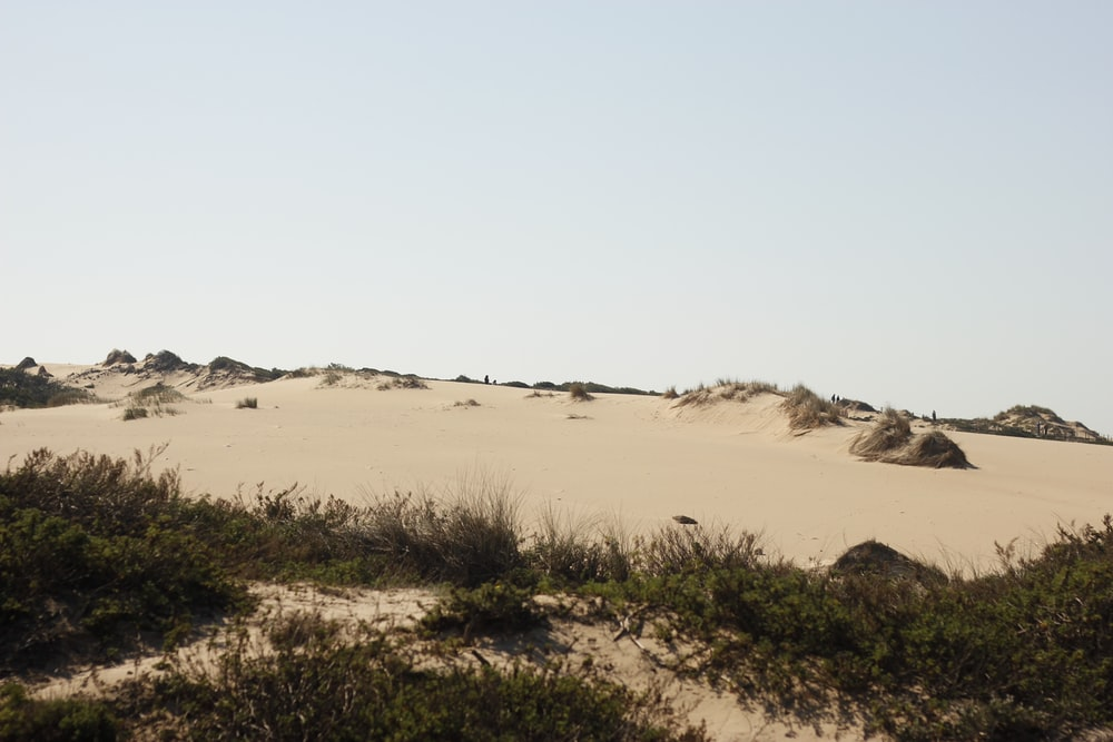 green grass on brown sand during daytime