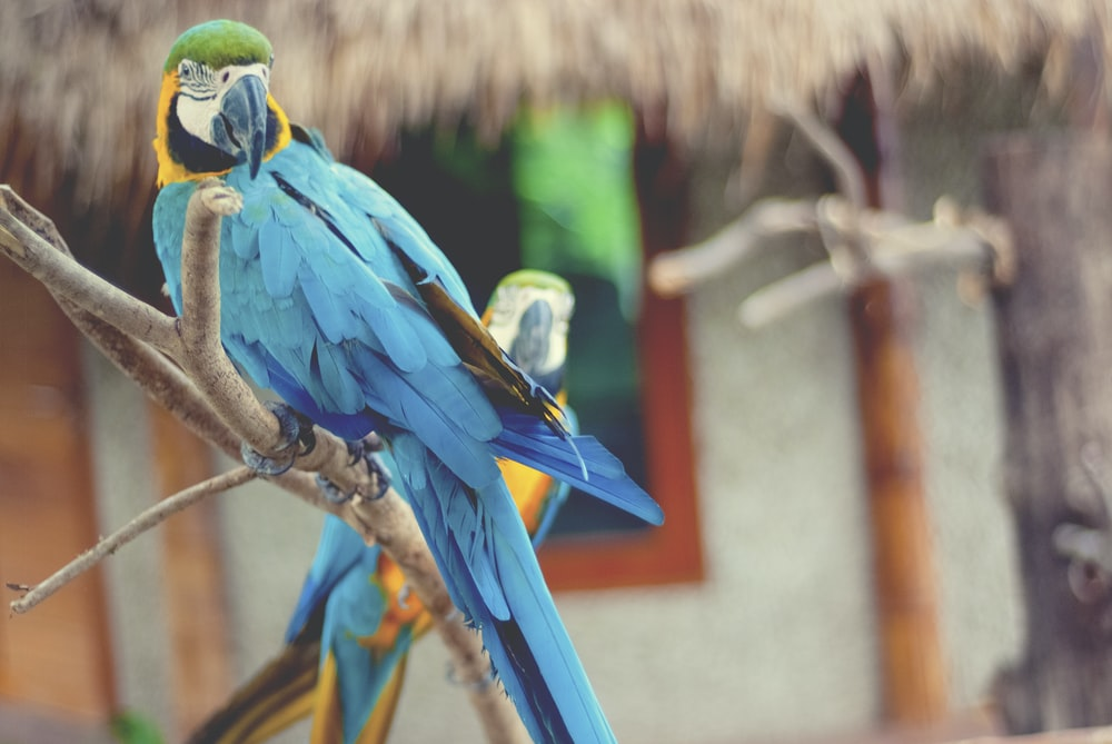 blue and yellow macaw on brown tree branch during daytime