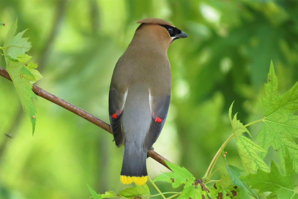 brown and gray bird on brown tree branch