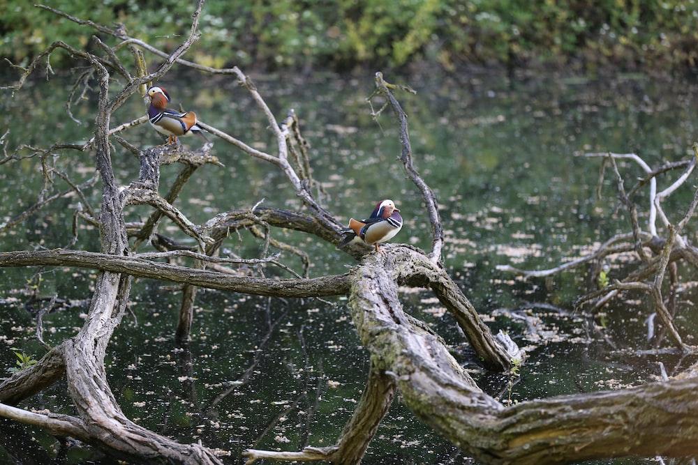 birds on tree branch during daytime