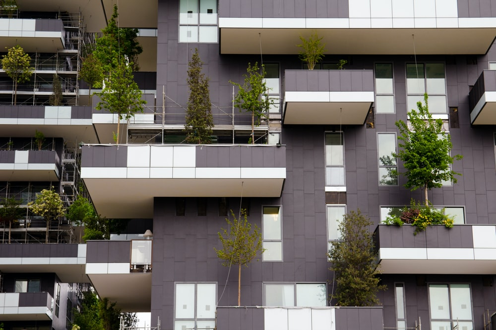 green trees in front of white concrete building