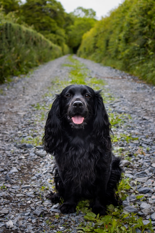 black long coat large dog on grey pathway during daytime