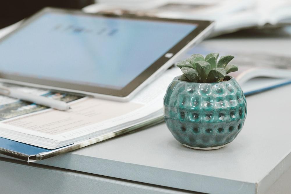 green plant in blue ceramic vase
