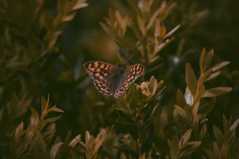 brown and black butterfly perched on green plant
