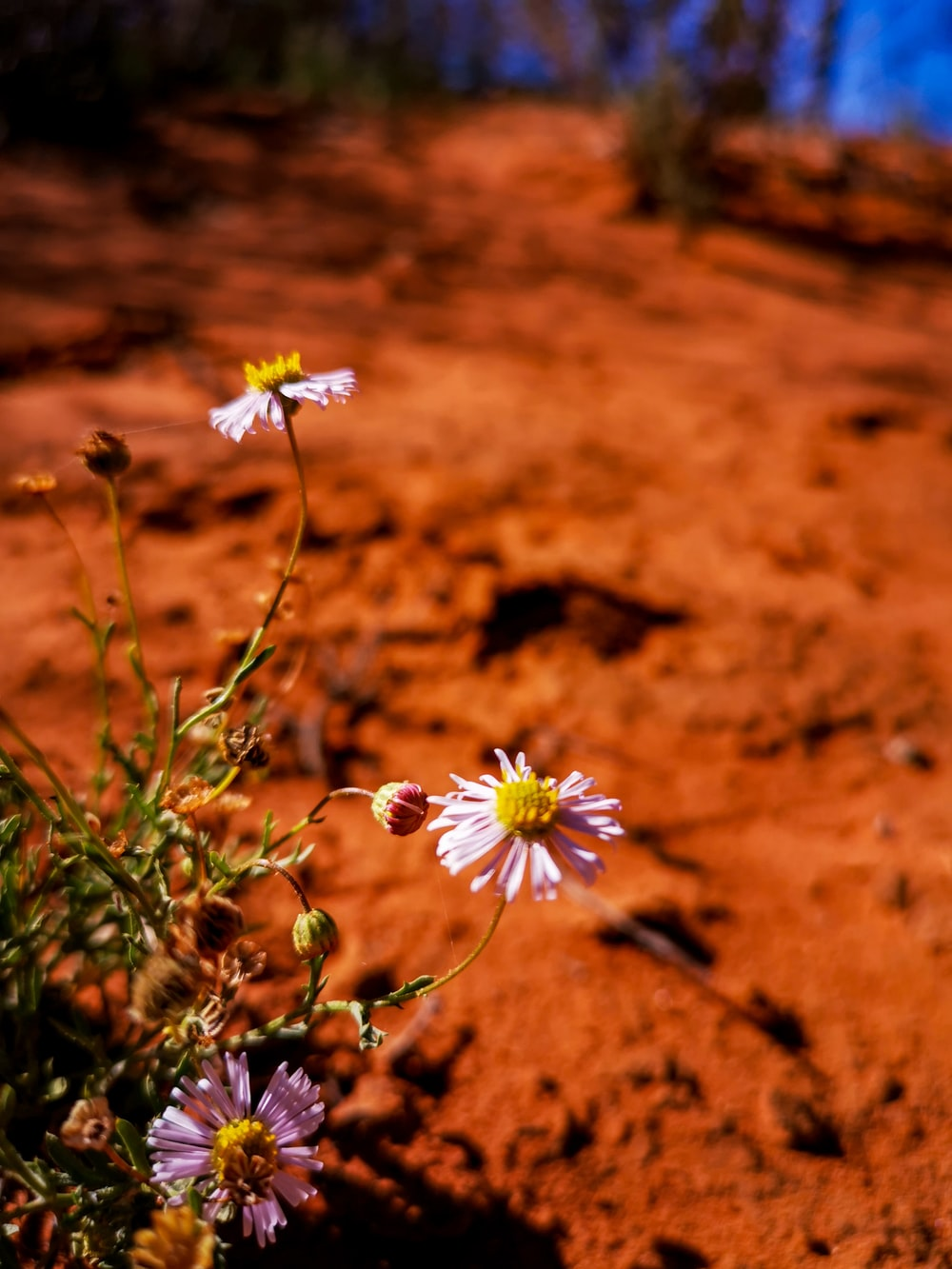 white and yellow flowers on brown soil