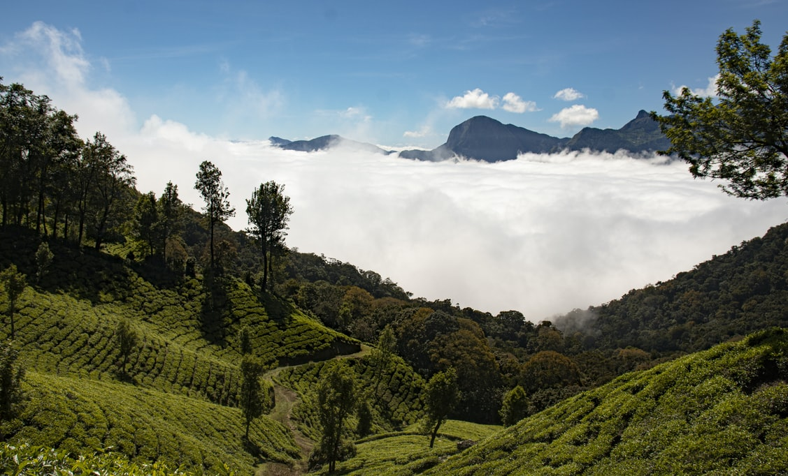 Tea estates in Kerala