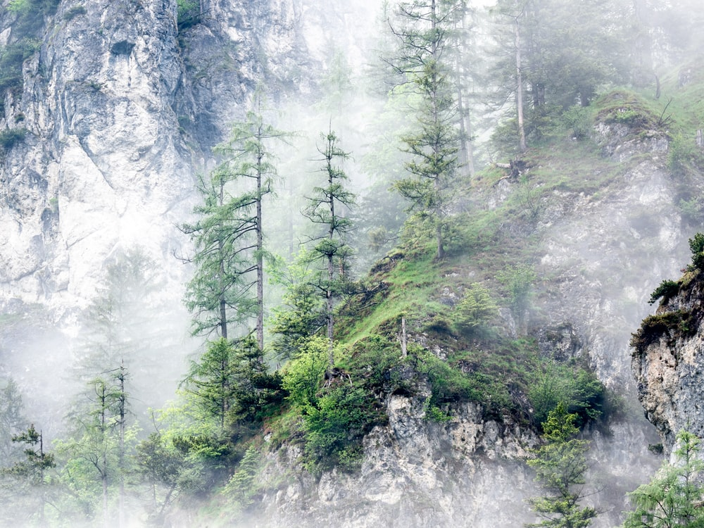 green trees on white snow covered mountain during daytime