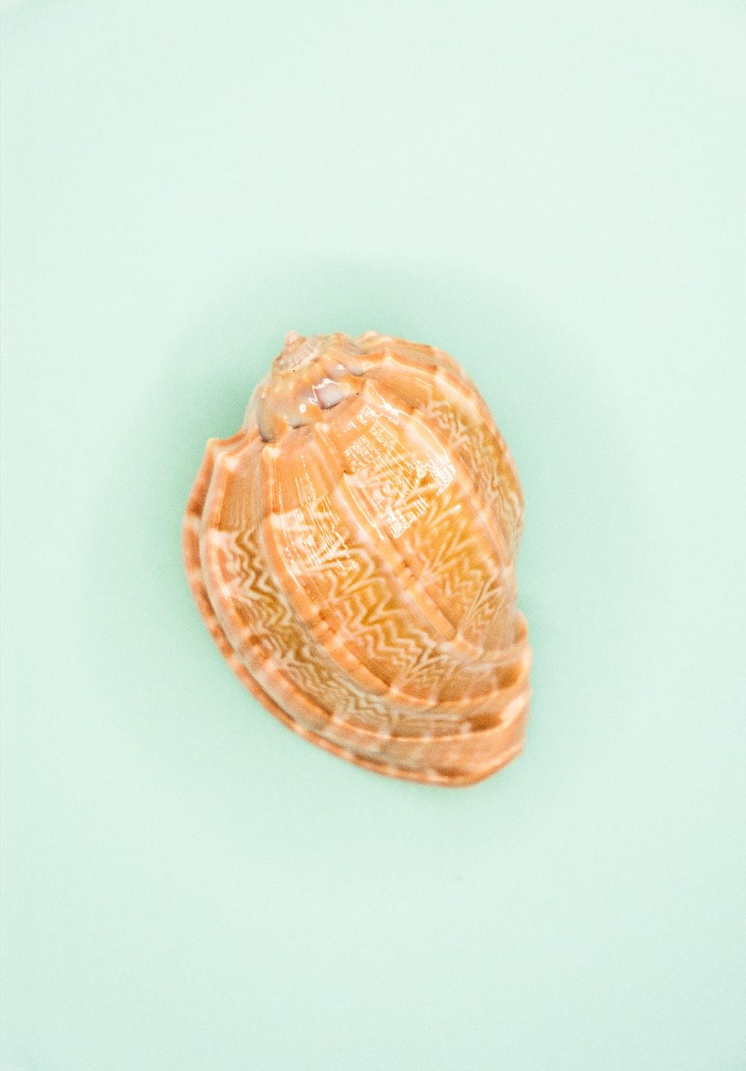 Still life shell 2  👋 Small donation -> huge appreciation paypal.me/DanieleFranchi 🙏🙏🙏