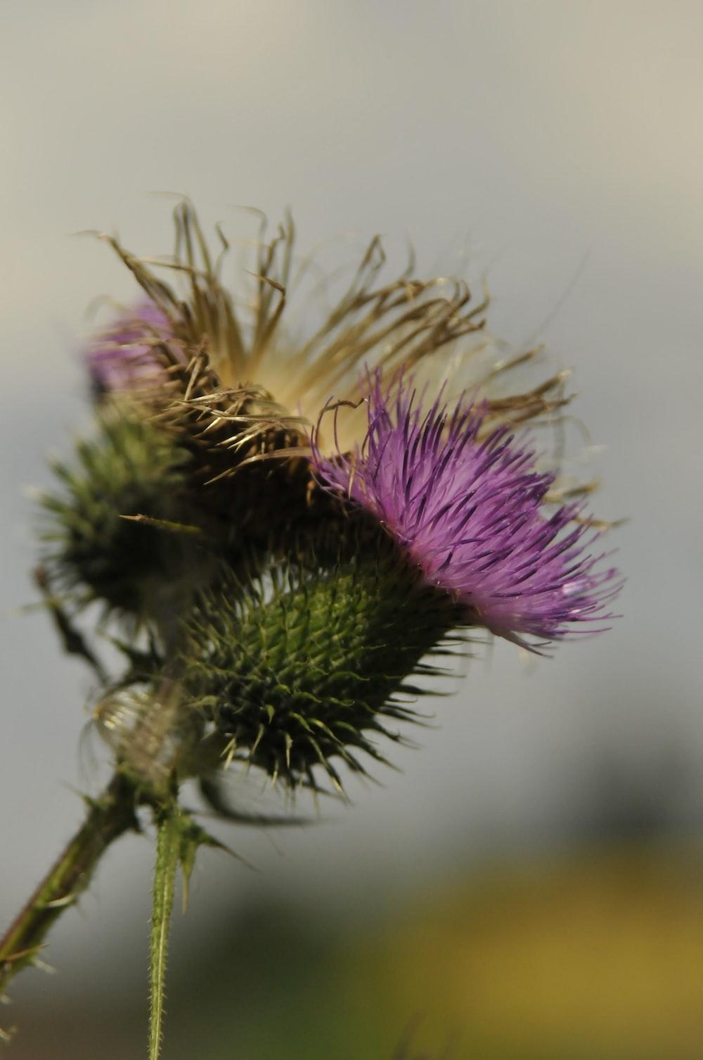 pink and green flower in tilt shift lens