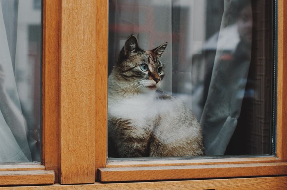 white and brown cat on brown wooden window
